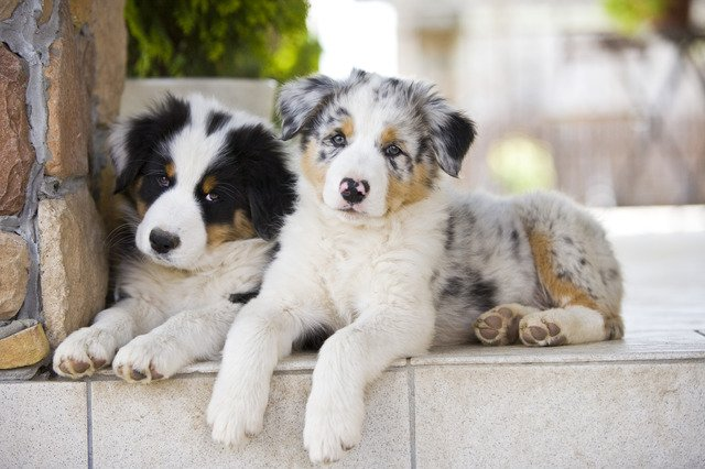 У собаки черное небо у собаки