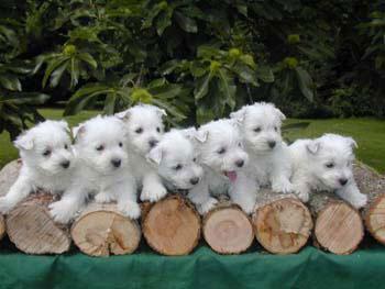 породы маленьких собачек фото и название