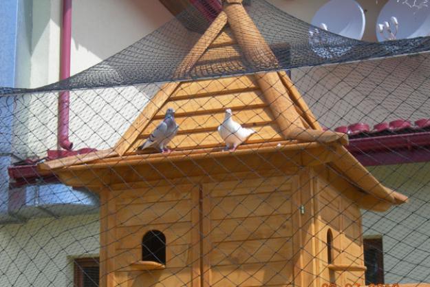 Как построить своими руками голубятню