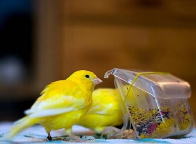 Как кормить ястреба в домашних условиях видео