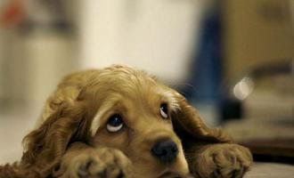 Что делать, если моя собака страдает от какой-либо фобии?