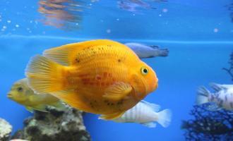Что делать, если рыба выпрыгивает из воды