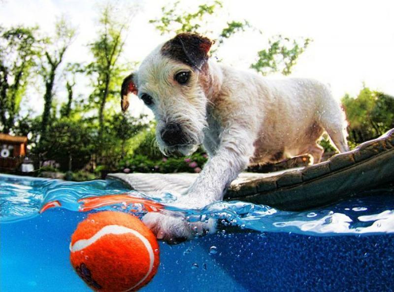 Что делать, если моя собака боится плавать?