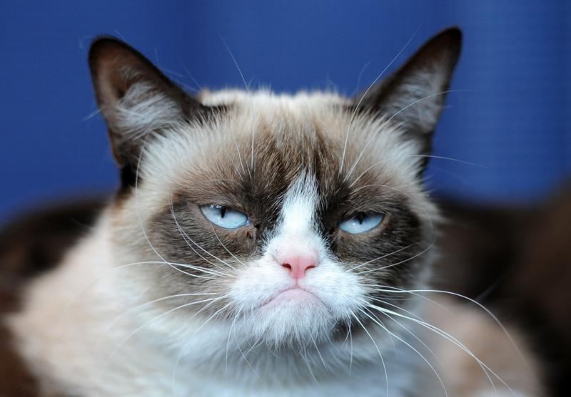 фото кота сердитого