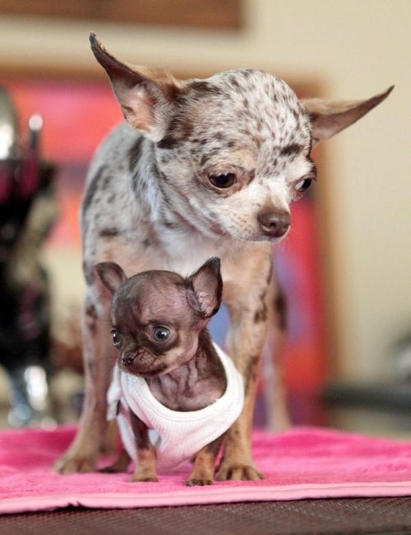 Корма для собак и кошек   zoomagazinru