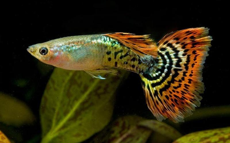 Что делать, если рыба портит оборудование аквариума