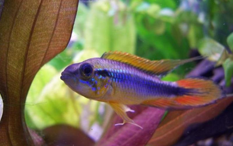 Что делать, если рыба обкусывает плавники других рыб