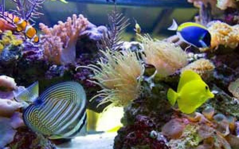 Что делать, если рыба преследует другую рыбу