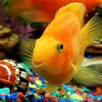 Что делать, если рыба пускает пузыри