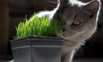 Огород для кошек