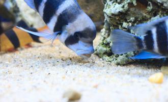Что делать, если рыба роется в грунте