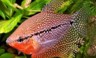 Что делать, если рыба не подпускает других рыб к пище