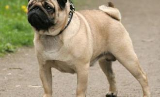 запор у собак