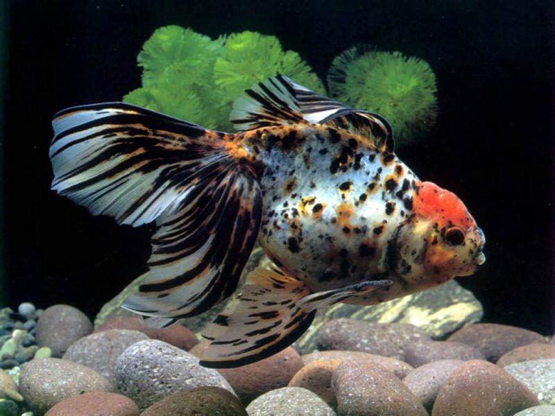 Что делать, если рыба прячется